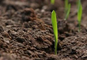 la-lavorazione-del-terreno-e-la-semina-L-McHh3l