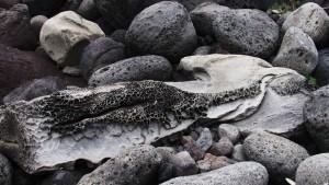 Roccia coccodrillo, Acquaranni